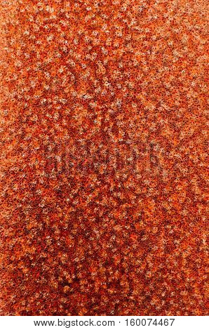 Multicolored texture of rusty spotted metal sheet