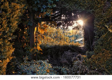 Beams of the Sun across the natural window of a leafy forest