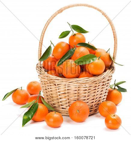 Fresh harvested clementines with green leaves in basket isolated on white background.