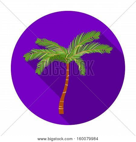 Mexican fan palm icon in flat style isolated on white background. Mexico country symbol vector illustration.