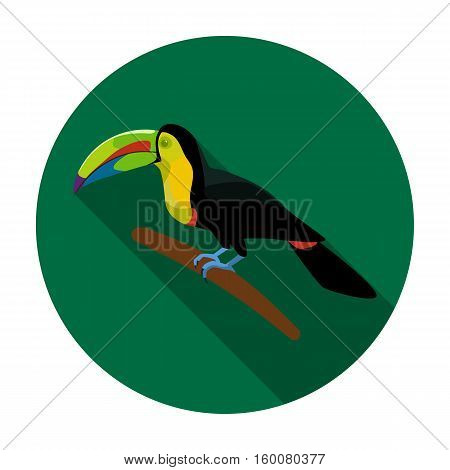 Mexican keel-billed toucan icon in flat style isolated on white background. Mexico country symbol vector illustration.