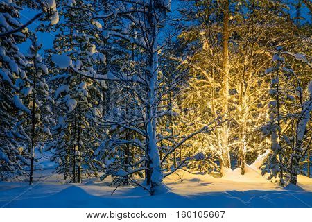 Christmas fairytale in the snowy forest, winter night and Christmas tree glowing lights - holidays background