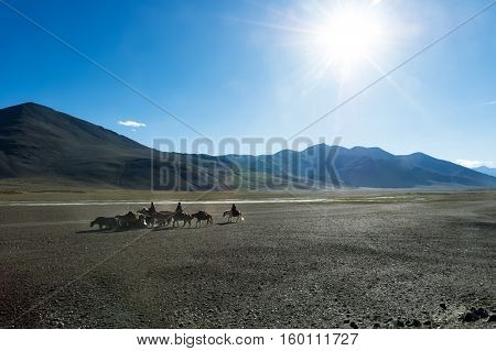 Tibetan nomads travelling with hourses and yaks. Ladakh highlands, India.