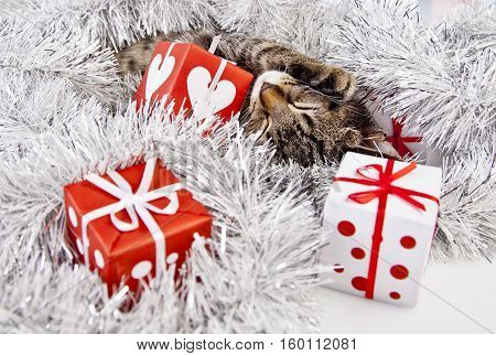 christmas cat with a christmas decoration and gifts