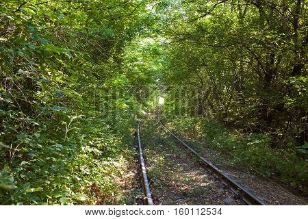 Bending rail track among the thickets of trees at the end is a light in a tunnel