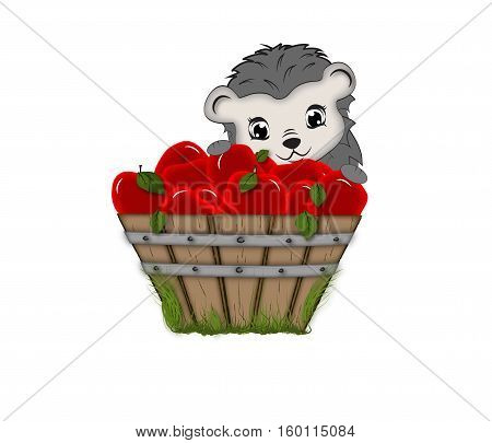 Vector image of a hedgehog and a bucket of red apples.Illustration of hedgehog.