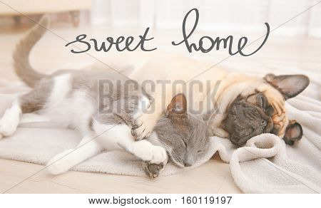 French bulldog and cute cat sleeping on floor. Text SWEET HOME.