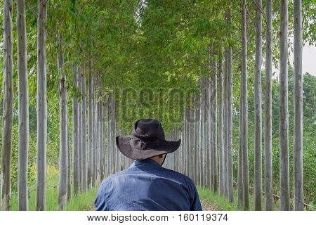 Man wearing jean jecket and black hat standing look row eucalyptus tree.
