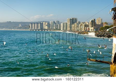 Birds enjoying the sun and surf in Vina del Mar Chile