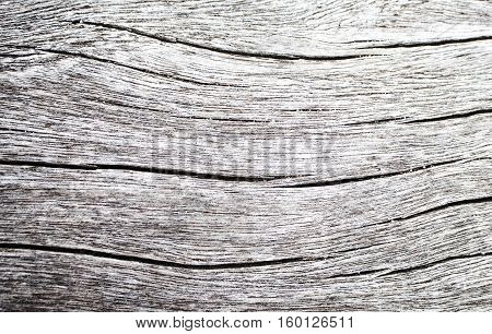 Wood texture closeup photo. White timber board with weathered crack lines. Natural background for shabby chic design. Grey wooden table image. Old tree trunk without bark. Sea wood rustic background
