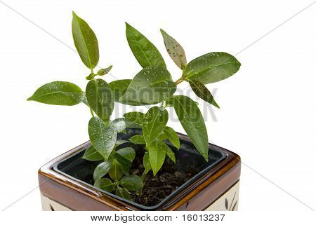 Green Seedlings