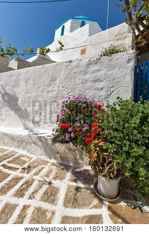 White chuch with blue roof and Flowers in town of Parakia, Paros island, Cyclades, Greece