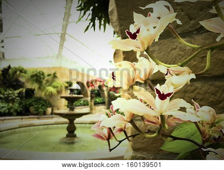 White Flowers in an atrium with fountain
