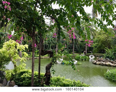 beautiful tropical gardens, lots of greenery, trees blooming purple flowers, a pond with greenish water and artificial swans in the water traces from the rain