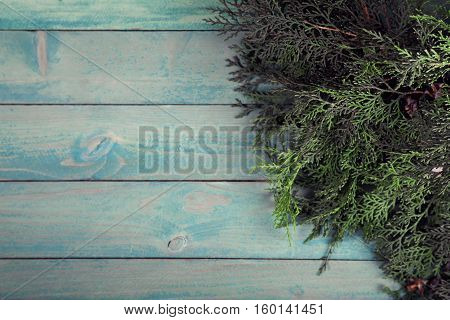 Branch of thuja on old wooden background