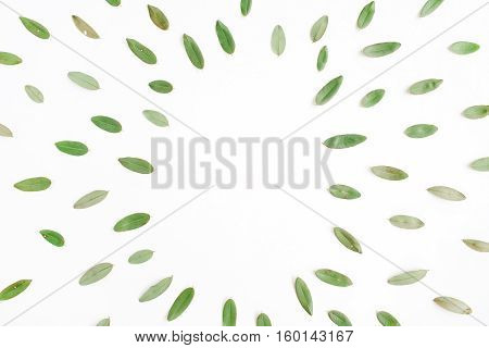 frame with green petals isolated on white background. flat lay top view