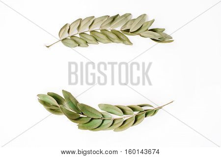 frame with green branches isolated on white background. flat lay top view