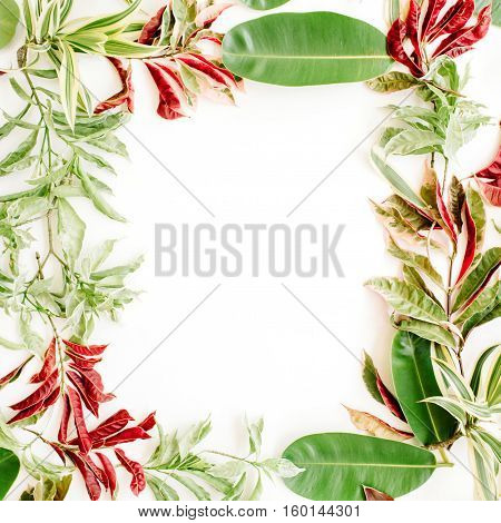 red and green petals and leaf frame on white background. flat lay.