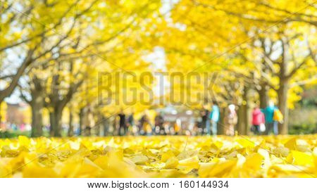 Autumn and yellow leaf background concept - Blurred yellow leave and ginko tree in japan garden background