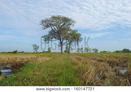 Fields in Thailand,After harvesting fields in Thailand