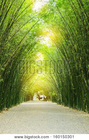The Tunnel bamboo trees and walkway with sun light.