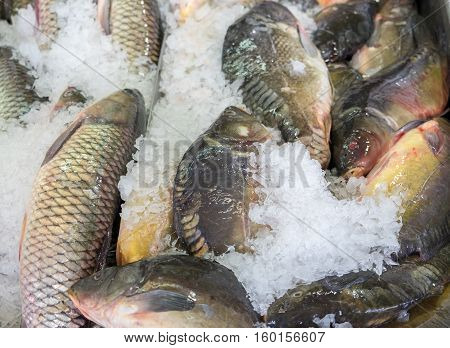 Fresh Serranidae And Cyprinus Or  Typical Carps On Ice At The City Market