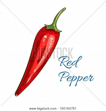 Pepper vegetable icon. Red spicy chili pepper pod. Vector isolated sketch object. Vegetarian and vegan cuisine spice. Whole veggie of mexican jalapeno hot pepper for grocery store, farmer market