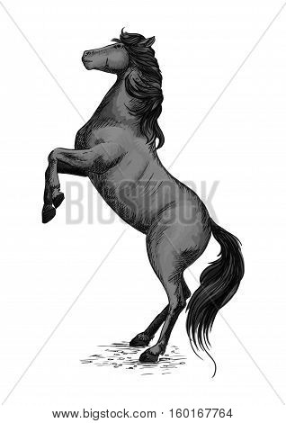 Wild horse stallion rearing. Mustang in rage symbol for sport racehorse badge