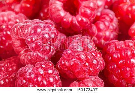 Ripe Raspberries. Red Juicy Berries Closeup. Macro. Background Of The Berries.