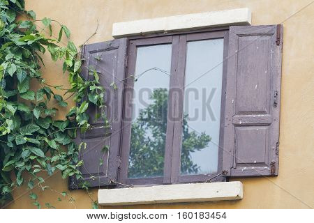 background nature creeping plant beside window at home