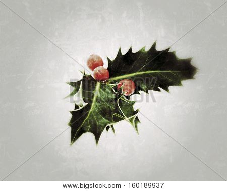 Holly with red berries with grunge effect