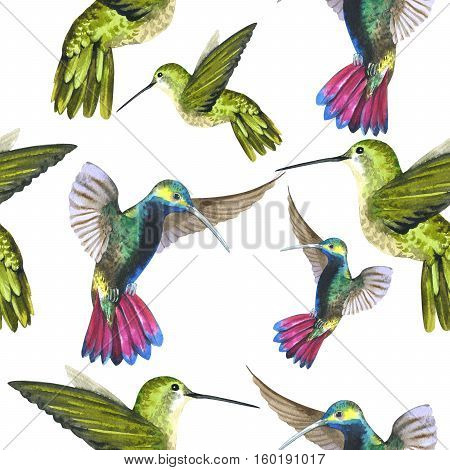 Sky bird colibri in a wildlife pattern by watercolor style isolated. Wild freedom, bird with a flying wings. Aquarelle bird for background, texture, pattern, frame, border or tattoo.
