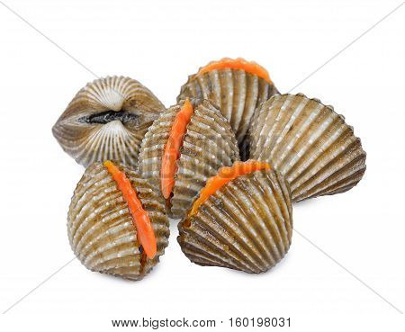 fresh cockles seafood the isolated on white