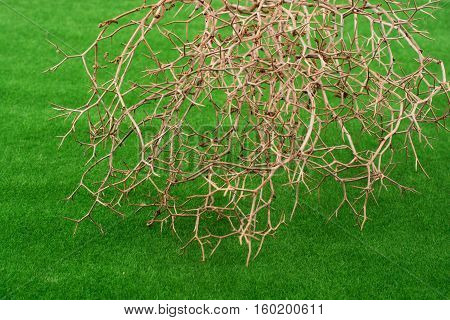 Thorny Dry Bush Placed On Green Grass
