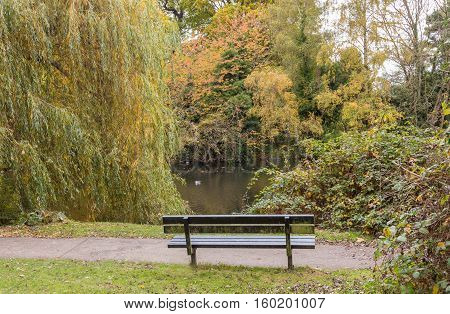 Taken on a visit to The Glade Sidcup Kent on a November afternoon. A solitary bench which looks towards the lake.