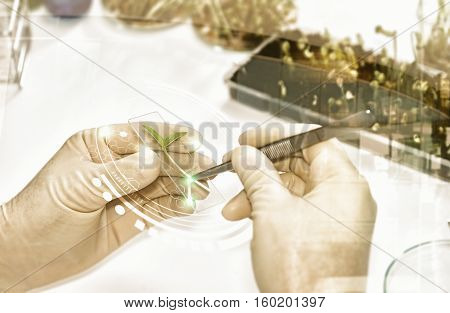 Double Exposure Of Scientists Working Took The Sprouts Are Beginning To Experiment Or Breeding Sprou