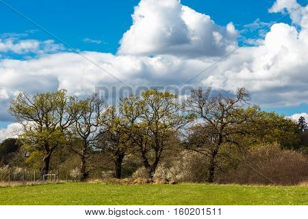 Taken on a walk over farmland near Abridge in Essex in springtime on a bright sunny day.
