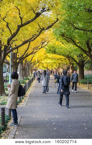 TOKYO, JAPAN - NOVEMBER 20, 2016. Many people walking under ginkgo trees at Icho Namiki Avenue, Meiji Jingu Gaien Park, Tokyo, Japan.
