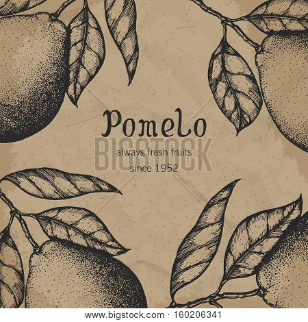 Vintage template. Hand drawn design with citrus fruits. Vector illustration of pomelo.