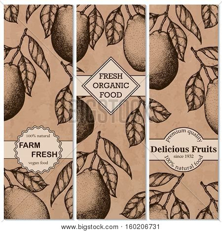 Natural organic tropical fruits vertical banners set of hand-drawn pomelo design template vector illustration