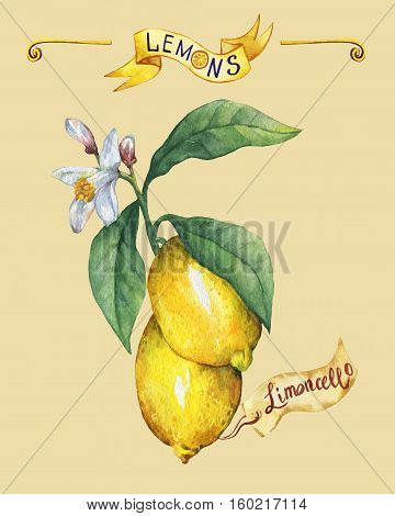 Branch of the fresh citrus fruit lemon with green leaves and flowers. Poster. Hand drawn watercolor painting on yellow background.