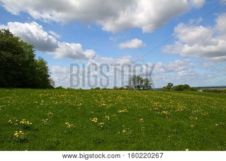 Landscape / Landscape with fields and meadows