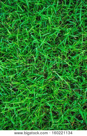 Beautiful Green Grass Feel Fresh Texture