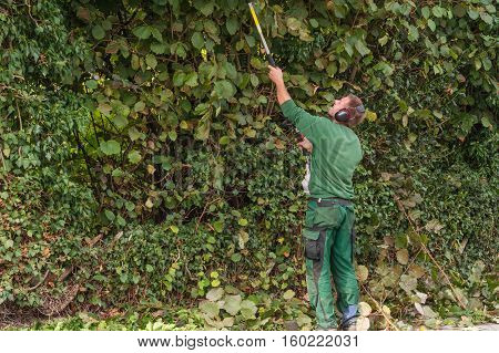 New Cutting a hedge with a hedge trimmer motor.