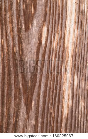 Texture Of Old Real Bark Wood