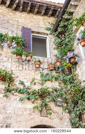 Ancient stone house in old town of Assisi Italy decorated with flowerpots and climber plants