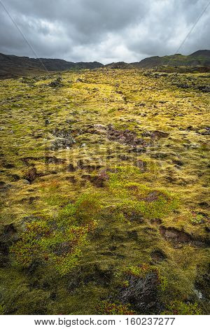 Icelandic Colorful Lava Soil On Iceland, Summer