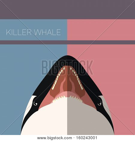 Vector image of the Killer Whale flat postcard