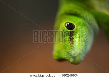 Reptile as a background. Natural beautiful composition