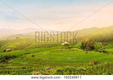 Terraced Rice Field and sky in Chiangmai Thailand